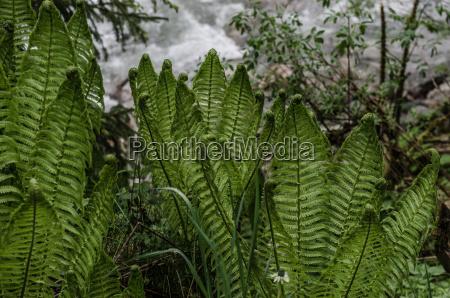 farn in nature