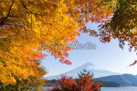 mt fuji in autumn season