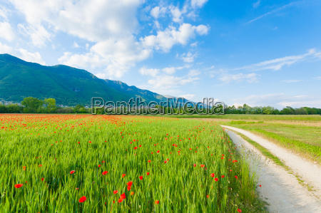dirt road trough italian countryside