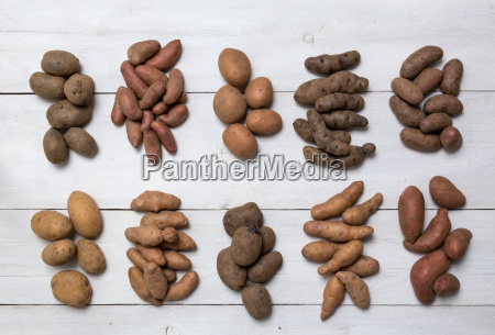 potato varieties on white wood concept