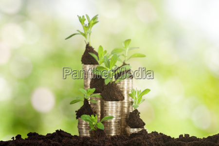 small, plant, on, stacked, coins - 20118913