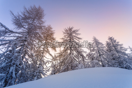 winter forest in julian alps mountains