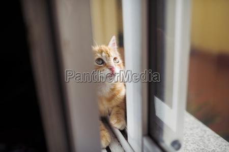 kitten sitting in between double window