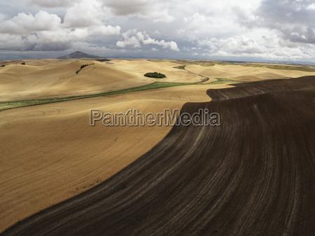 usa washington state palouse hills wheat