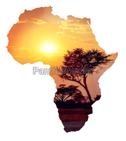 african sunset with acacia map of