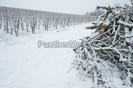 stack of branches at the vineyard