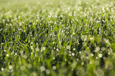 young, grass, plants, , close-up - 20236389