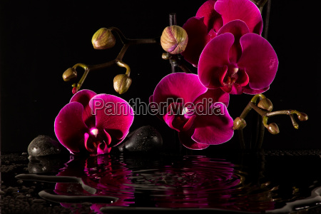 orchid reflection in the water and