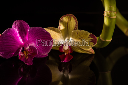 orchid with bamboo and black stones