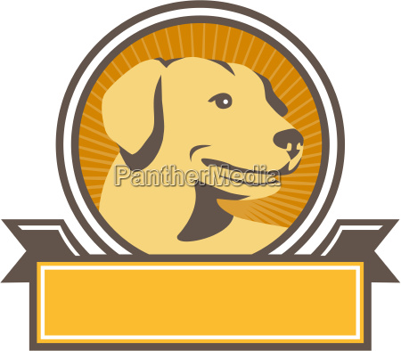yellow labrador golden retriever head circle