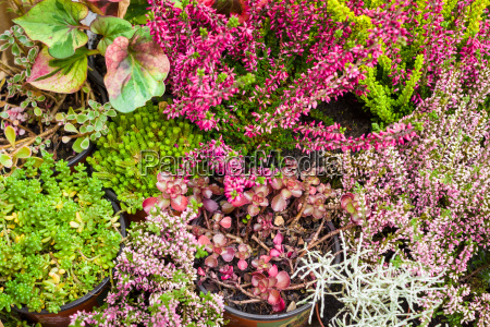 background of indoor plants and herbs
