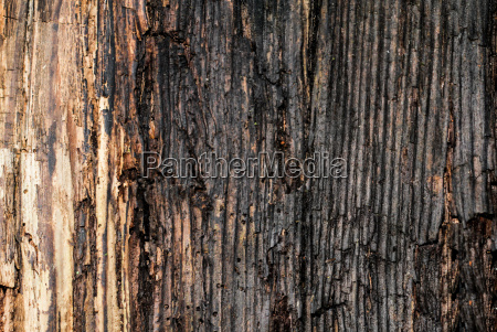old rotting wood texture nature material