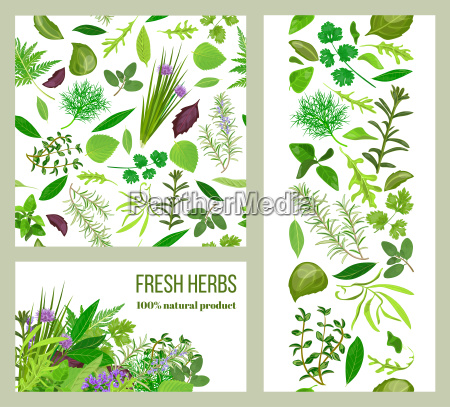 realistic popular culinary herbs labels set