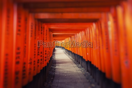 fushimi inari taisha shrine in kyoto