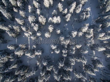 aerial view of winter forest