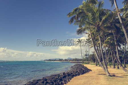 coconut palm tree on the sandy