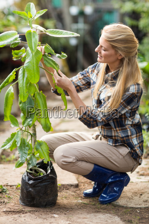 female gardener examining potted plant at