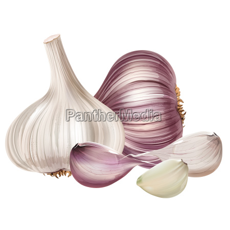 garlic, on, white, background - 20404809