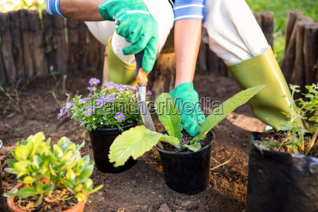 gardener planting potted plants at garden