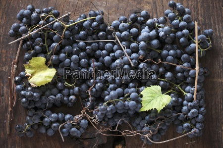 black grapes with vine leaves