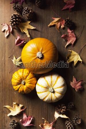 pumpkin still life with pine cones