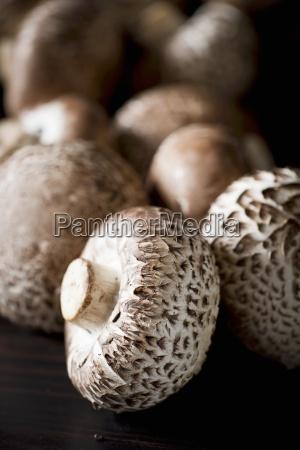 still life assorted mushrooms