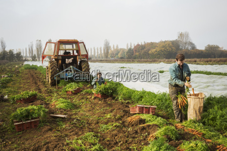 a small group of people harvesting