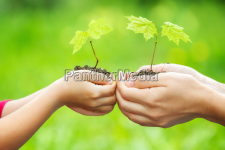 adult, and, child, holding, little, green - 20507191