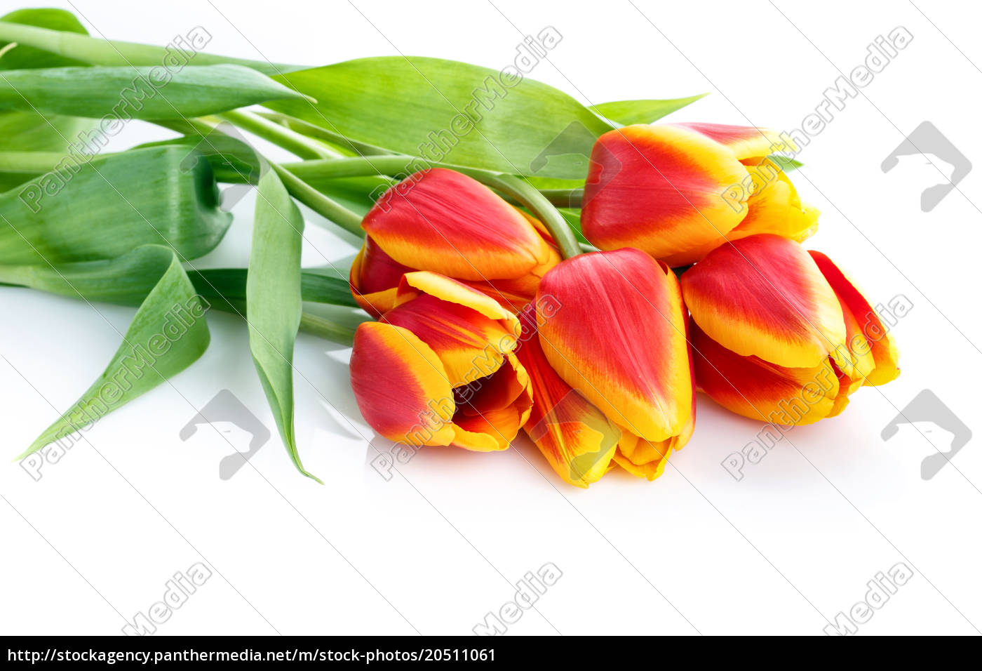 bouquet, of, red, and, yellow, tulips - 20511061