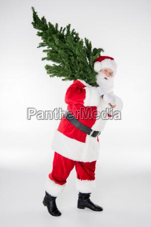 santa, claus, carrying, fir, tree - 20511919