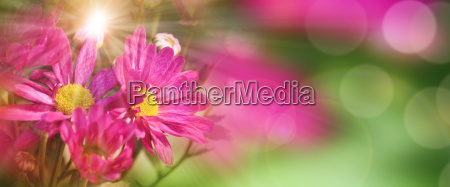 colorful, flowers, in, spring - 20512459