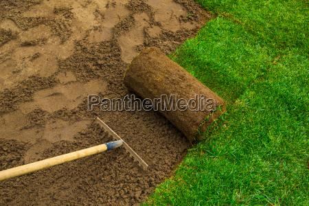 lawned, garden - 20513073