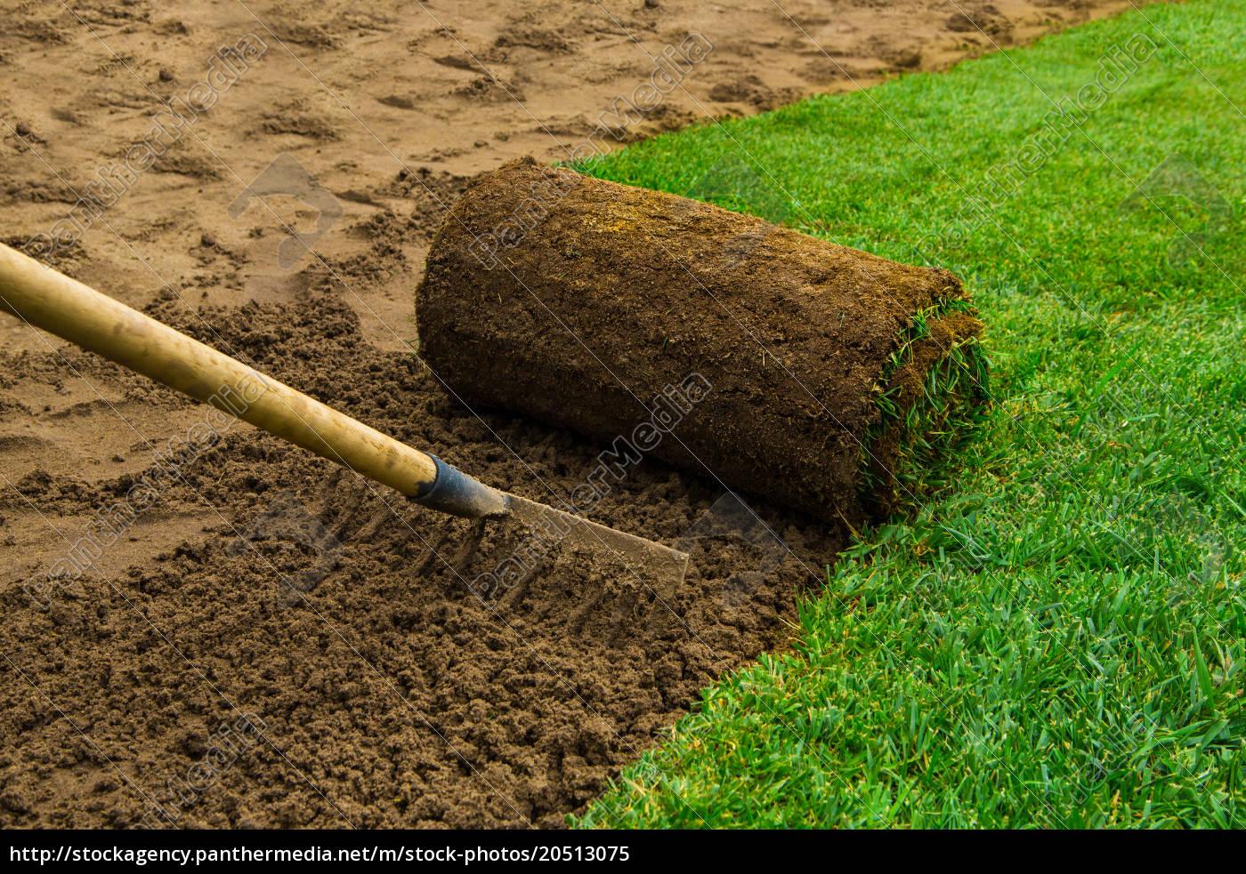 lawned, garden - 20513075