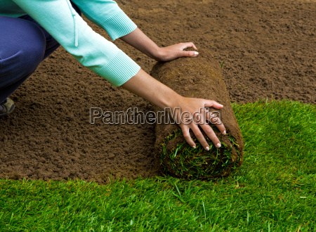lawned, garden - 20513077