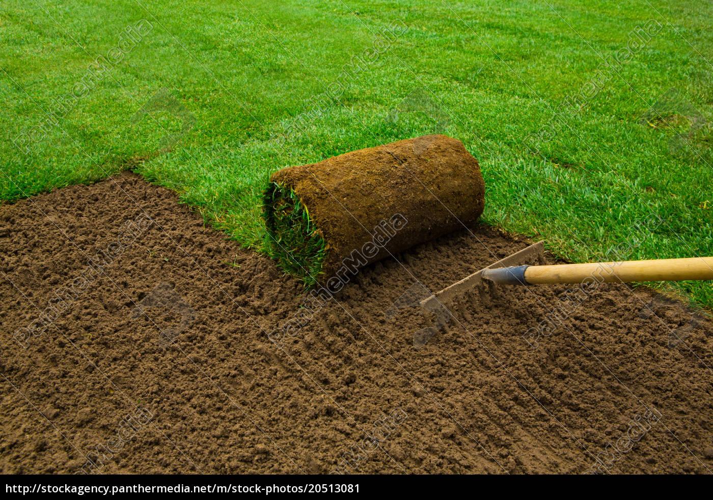 lawned, garden - 20513081