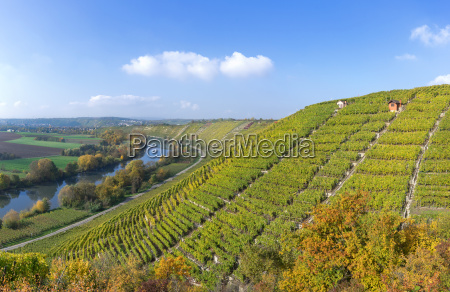 vineyards in the fall on the