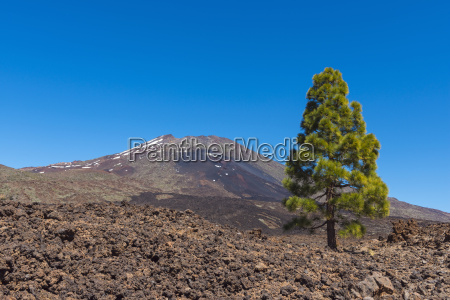 pico del teide mountain with pine