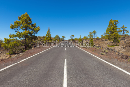 road through volcanic landscape with pine