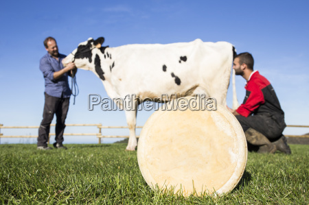 cheese with cow and farmers in
