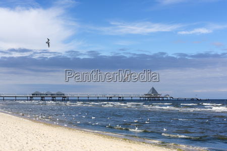 germany usedom heringsdorf beach seagulls and