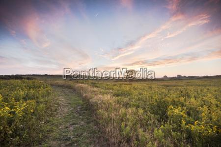 the fields of golden rod in
