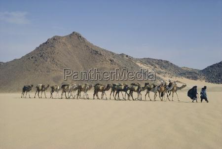 tuareg and wife leading camel train