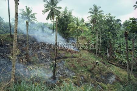 slash and burn agriculture st lucia
