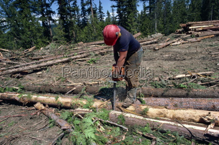 cutting logs to size for transport