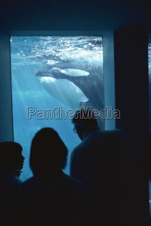 family watching killer whales vancouver aquarium