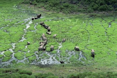 elephant amboseli national park kenya east