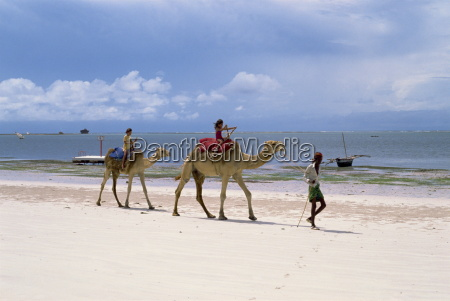 camels for tourists nyali beach kenya