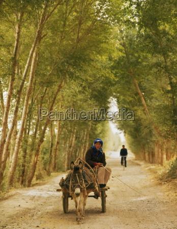 woman riding donkey cart on a