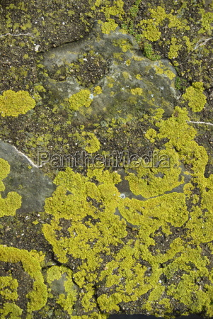 lichen on rocks devon england united