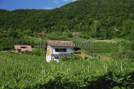 vineyards zagorje region croatia europe